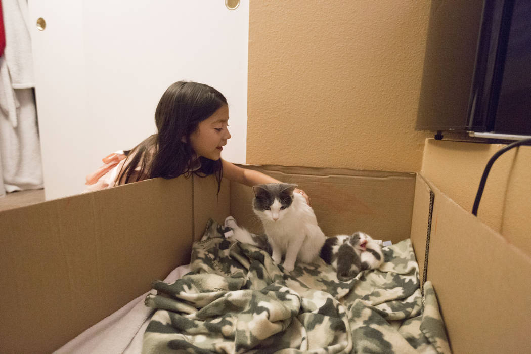 Velonee Calderon, 8, pets her cat that recently had a litter of kittens in their home in Las Vegas, Wednesday, Dec. 6, 2017. Elizabeth Brumley Las Vegas Review-Journal  @EliPagePhoto
