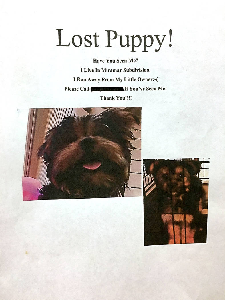 A lost puppy flyer from the Perry family.