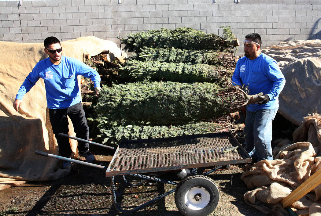 Star Nursery employees Jose Gebara, left, and Pablo Prado pile their delivery of Christmas trees at 8170 Charleston Blvd., on Friday, Dec. 8, 2017, in Las Vegas. Over 1400 Christmas tress from Ore ...