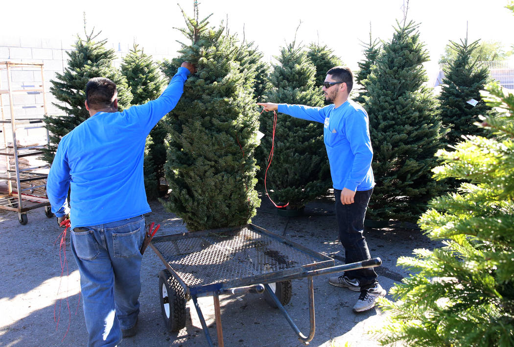 Star Nursery employees Jose Gebara, left, and Pablo Prado display Christmas trees at 8170 Charleston Blvd., on Friday, Dec. 8, 2017, in Las Vegas. Over 1400 Christmas tress from Oregon and Washing ...