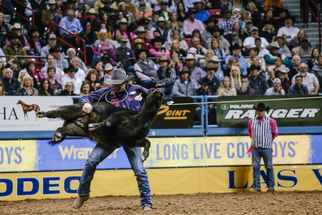 Tuf Cooper of Weatherford, Texas lifts a steer in the tie-down roping event during the fifth night of the 59th Wrangler National Finals Rodeo at the Thomas & Mack Center in Las Vegas, Monday,  ...