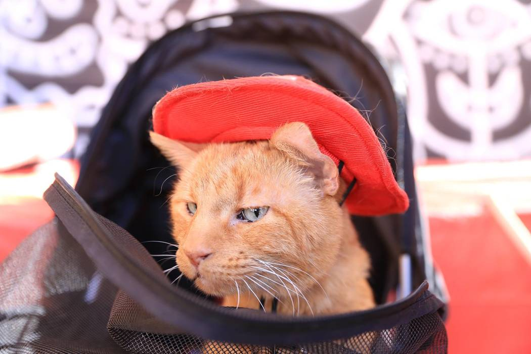"""Meow or Never has held two pop-up events in Las Vegas to help adopt cats and raise money for a brick and mortar cafe in the southwest valley. The event was held at the """"Market in the Alley"""" event  ..."""