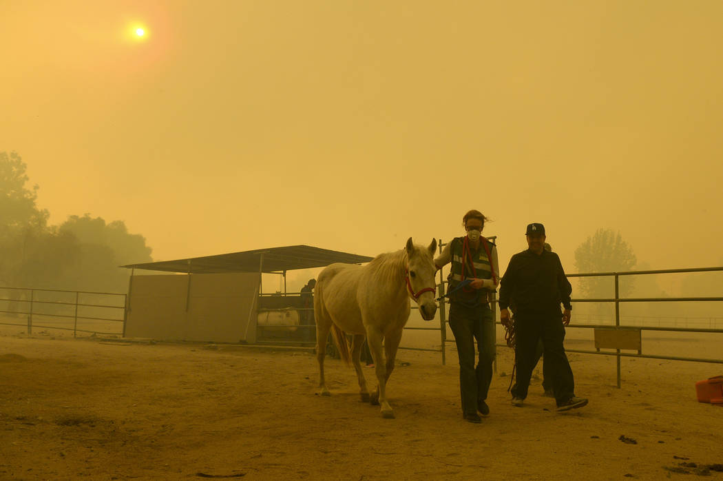 Horses are evacuated from a ranch along Kagel Canyon at the Creek fire, Tuesday, Dec. 5, 2017 in La Canada Flintridge, Calif.   Raked by ferocious Santa Ana winds, explosive wildfires northwest of ...