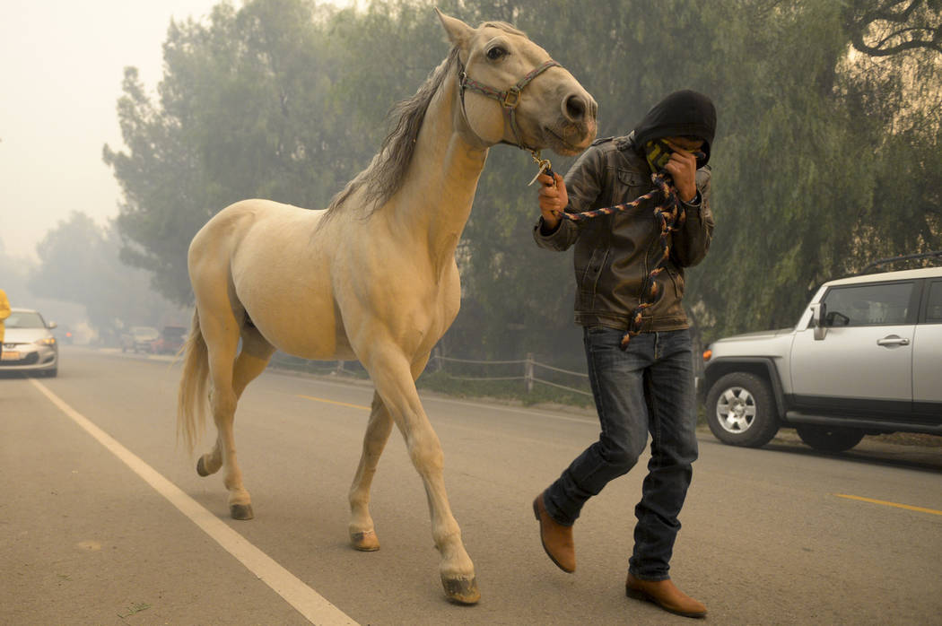 A horse is evacuated  at the Creek fire, Tuesday, Dec. 5, 2017 in La Canada Flintridge, Calif.   Raked by ferocious Santa Ana winds, explosive wildfires northwest of Los Angeles and in the city's  ...