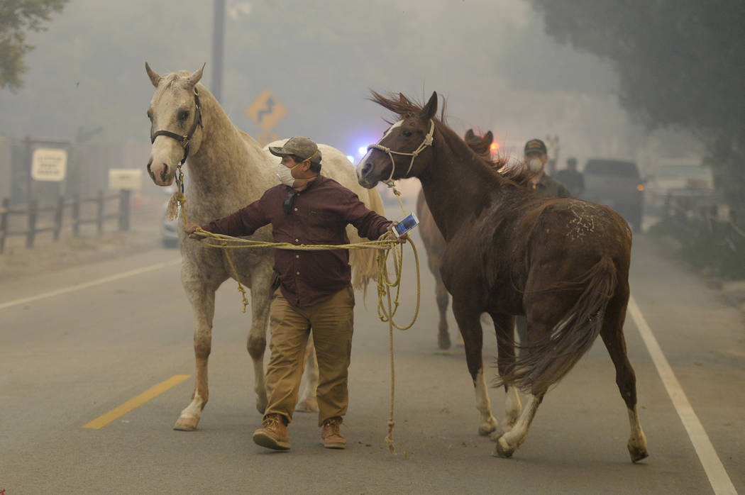 Horses are evacuated during the Creek fire, Tuesday, Dec. 5, 2017 in La Canada Flintridge, Calif.   Raked by ferocious Santa Ana winds, explosive wildfires northwest of Los Angeles and in the city ...