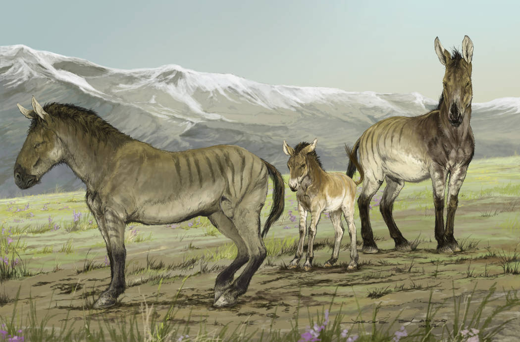 An illustration depicts a family of stilt-legged horsesʩn Yukon, Canada, during the last ice age. (Illustration by Jorge Blanco)