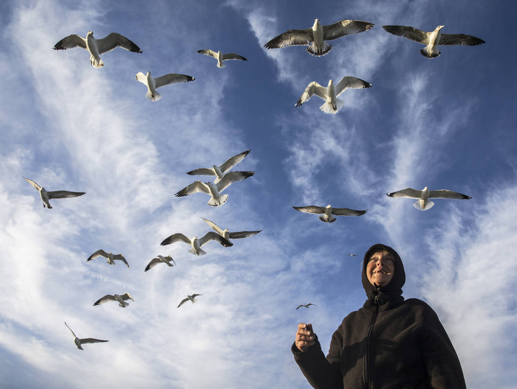 """Ann Pippin feeds a flock of seagulls on Tuesday, Feb 21, 2017, at Lake Mead Recreational Area, in Boulder City. """"It's so quiet and peaceful out here,"""" said Pippin. """"We'v ..."""