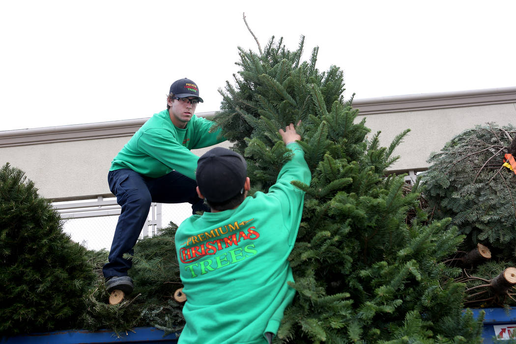 Zach Barnhart, left, and Alan Rodriguez of Premium Christmas Trees, which has a home Christmas tree removal service, drop trees off at the Lowe's Home Improvement tree recycling location at ...
