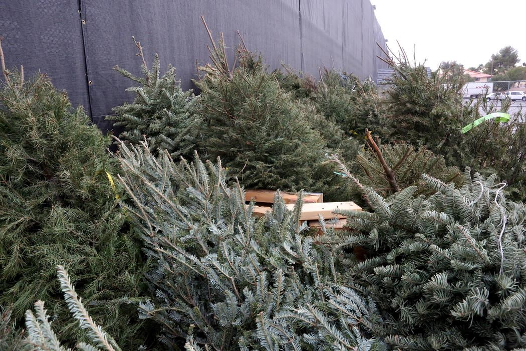 Unsold Christmas trees line the wall outside the garden center of the Lowe's Home Improvement location on Charleston Boulevard where they will be recycled with other dropped of trees on Tue ...