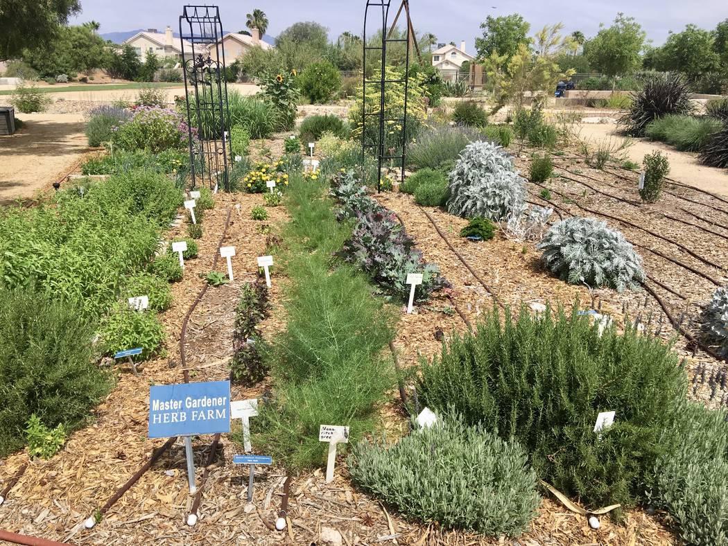 Master Gardeners Las Vegas Garden Designs