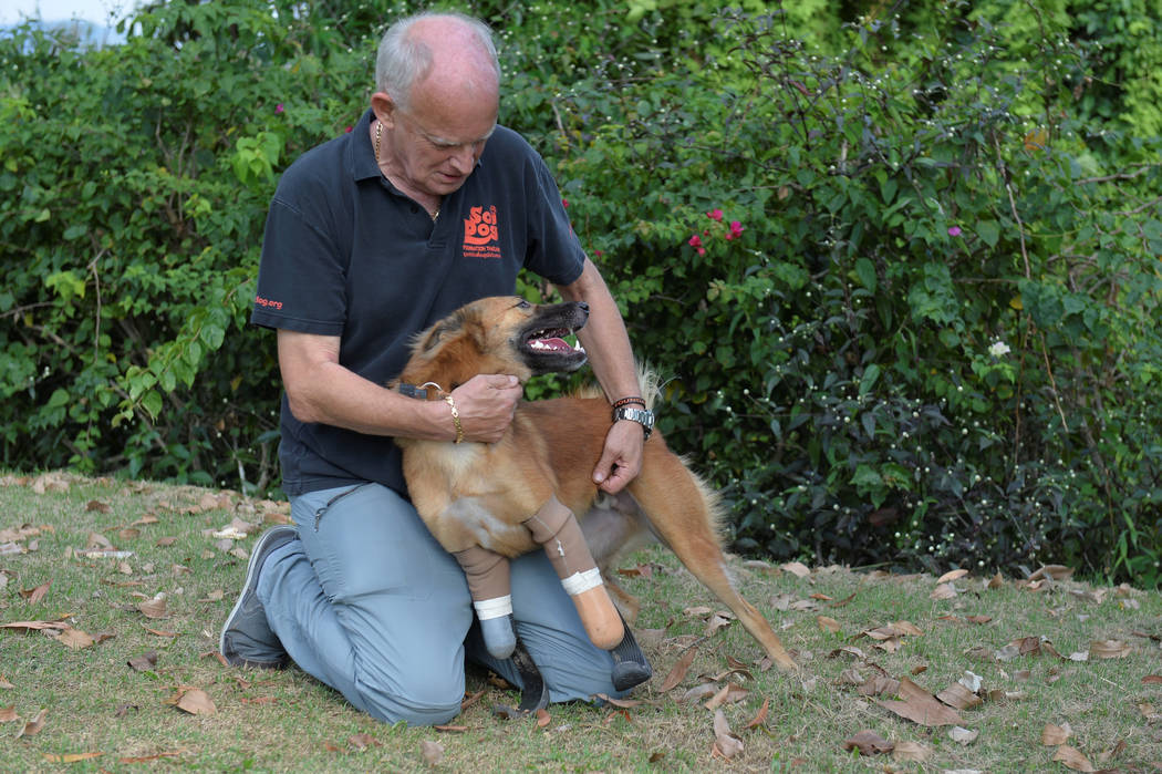 """Amputee dog named """"Cola"""" using carbon-fiber prosthetic blades made for it is seen with John Dalley from the Soi Dog Foundation in Phuket, Thailand December 16, 2017. (REUTERS)"""