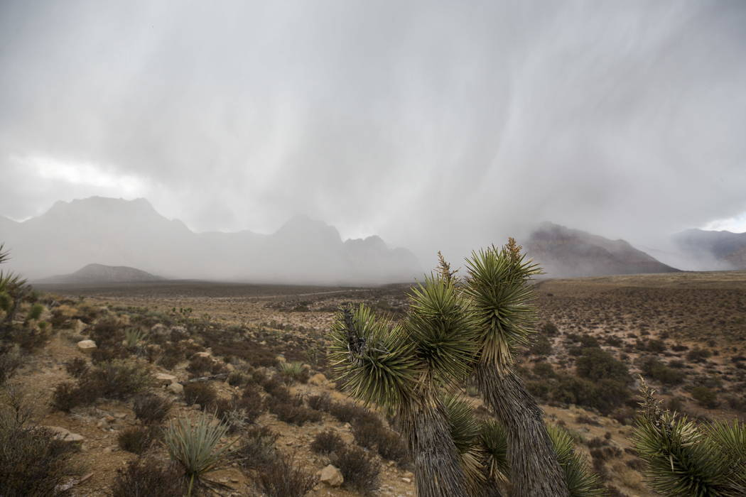 A light blanket of snow and scattered rain passed through Red Rock Canyon National Conservation Area on Saturday, Jan. 20, 2018. (Richard Brian Las Vegas Review-Journal)
