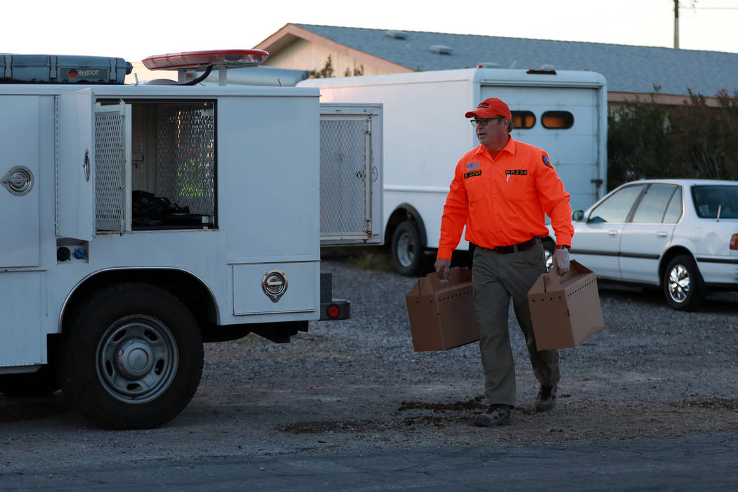 Bill Cobb of Red Rock Search and Rescue evacuates roosters from a property, which was involved in an investigation regarding neglected animals, in Las Vegas, Sunday, Jan. 21, 2018. Andrea Cornejo  ...