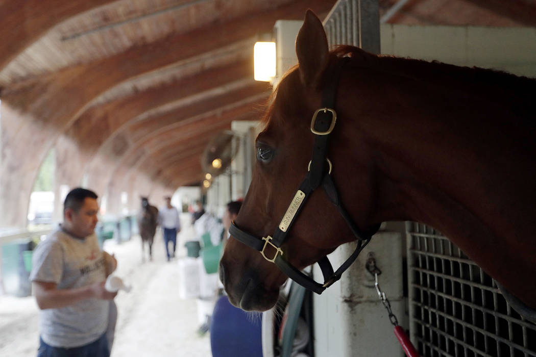 Gun Runner looks out from his stall at Gulfstream Park Tuesday, Jan. 23, 2018, in Hallandale Beach, Fla. Gun Runner will compete in the Pegasus World Cup horse race at Gulfstream Park on Saturday. ...