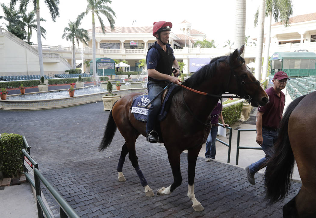 Exercise rider Jimmy McCarthy rides Taste of New York from the paddock at Gulfstream Park Tuesday, Jan. 23, 2018, in Hallandale Beach, Fla. Taste of New York will compete in the Pegasus World Cup  ...