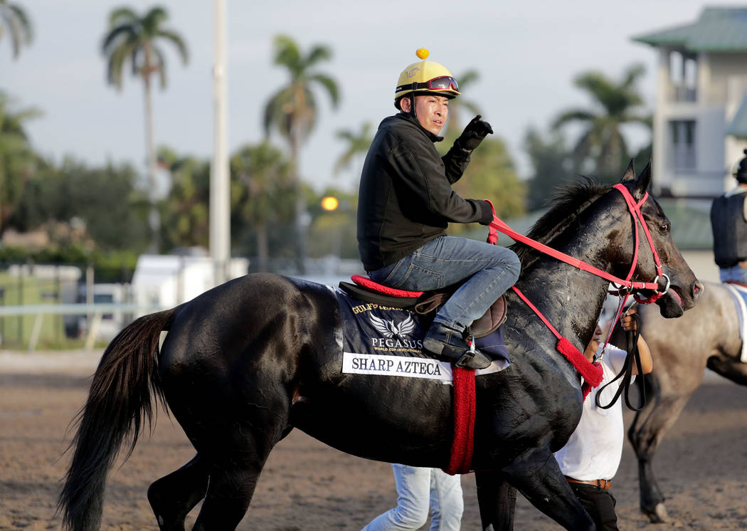 A rider takes Sharp Azteca to the barn after training at Gulfstream Park Wednesday, Jan. 24, 2018, in Hallandale Beach, Fla. Sharp Azteca will compete in the Pegasus World Cup horse race at Gulfst ...