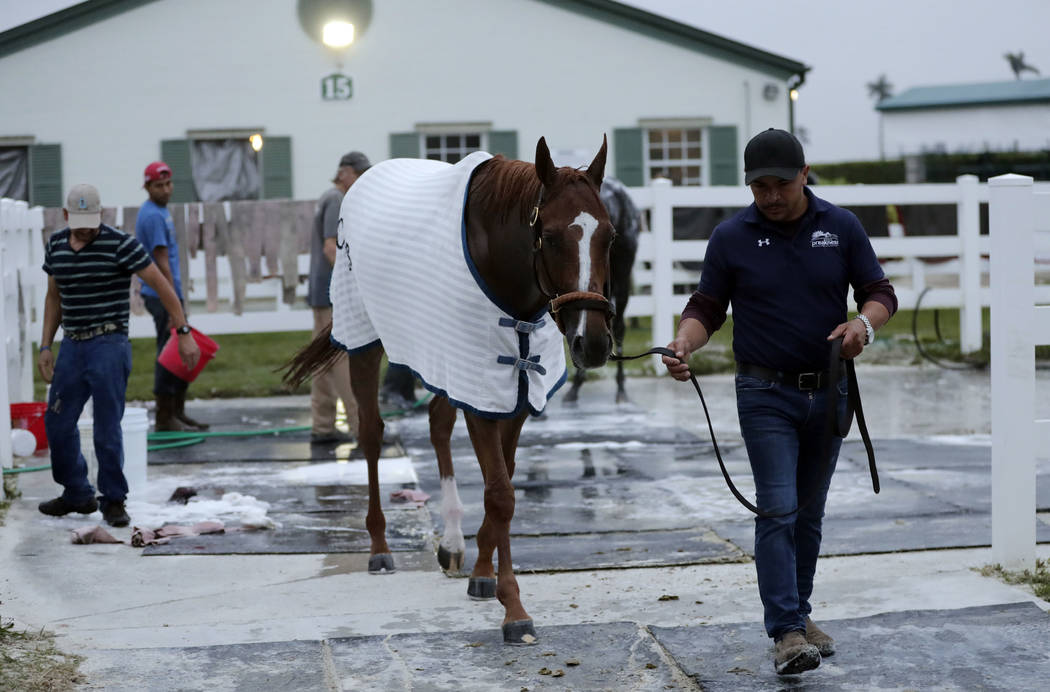 Stellar Wind is led to the barn at Gulfstream Park Wednesday, Jan. 24, 2018, in Hallandale Beach, Fla. Stellar Wind will compete in the Pegasus World Cup horse race at Gulfstream Park Saturday. (A ...