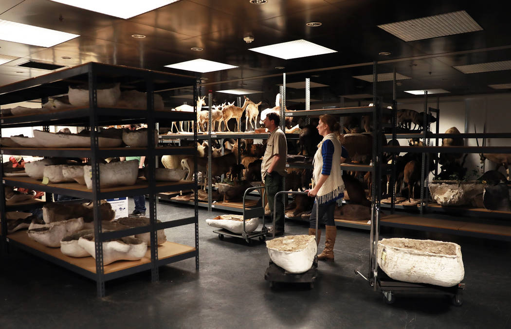 Drew Clark, 45, and Aubrey Bonde, 36, wait to store ice age fossils, which were relocated from the San Bernardino County Museum, at the Las Vegas Natural History Museum in Las Vegas, Sunday, Jan.  ...