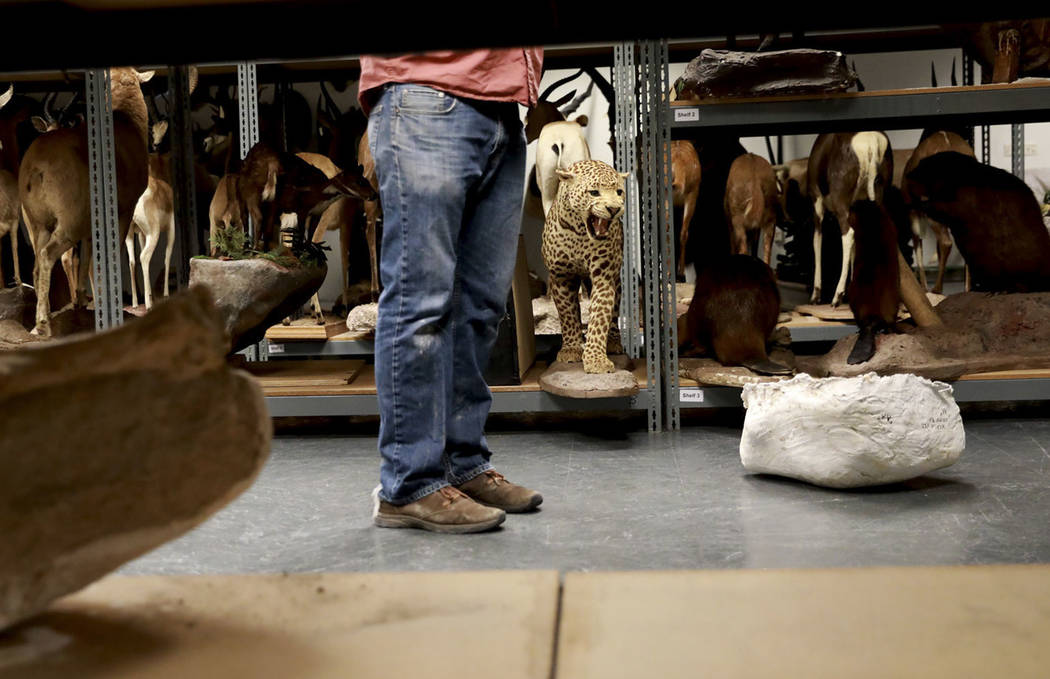 Josh Bonde, a 37-year-old paleontologist, waits to store ice age fossils, which were relocated from the San Bernardino County Museum, at the Las Vegas Natural History Museum in Las Vegas, Sunday,  ...