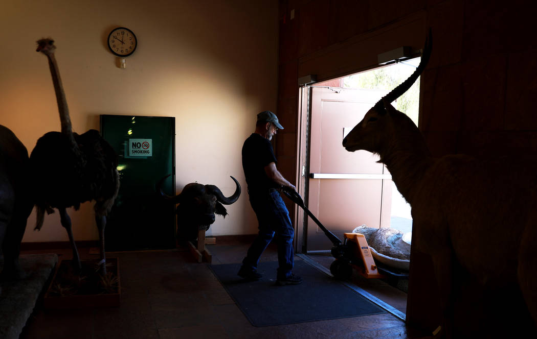 Exhibit Technician Glenn Orsburn helps unload ice age fossils, which were relocated from the San Bernardino County Museum, at the Las Vegas Natural History Museum in Las Vegas, Sunday, Jan. 28, 20 ...
