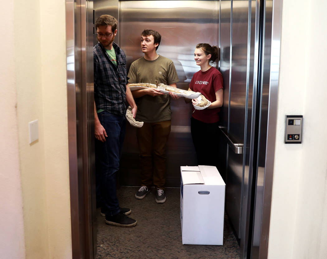 Volunteers ride in an elevator with ice age fossils, which were relocated from the San Bernardino County Museum, at the Las Vegas Natural History Museum in Las Vegas, Sunday, Jan. 28, 2018. The fe ...