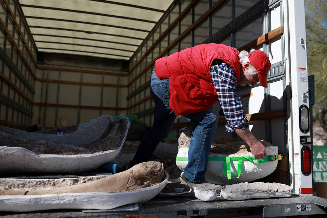 Geology Professor Steve Rowland helps unload ice age fossils, which were relocated from the San Bernardino County Museum, at the Las Vegas Natural History Museum in Las Vegas, Sunday, Jan. 28, 201 ...