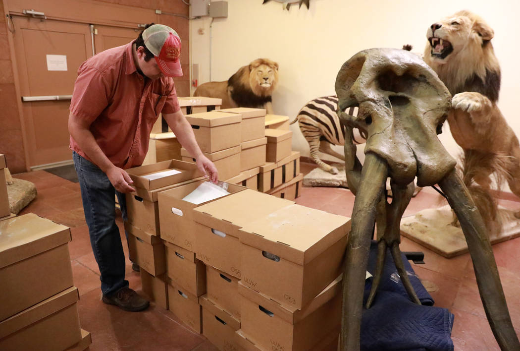 Josh Bonde, a 37-year-old paleontologist, looks through a box of ice age fossils, which were relocated from the San Bernardino County Museum, at the Las Vegas Natural History Museum in Las Vegas,  ...