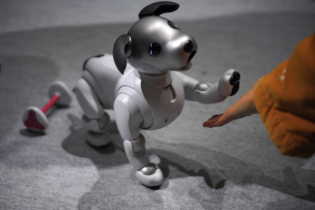 A guest plays with Sony Corp.'s new Aibo robot dog at its showroom in Tokyo. (AP Photo/Eugene Hoshiko)