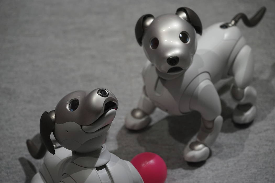 Sony Corp.'s new Aibo robot dogs are displayed at its showroom in Tokyo. (AP Photo/Eugene Hoshiko)
