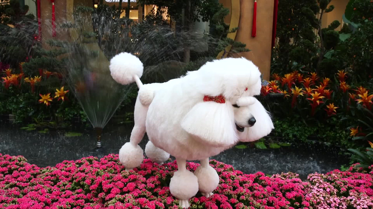 Bellagio Conservatory Debuts Chinese Year Of The Dog Display Las