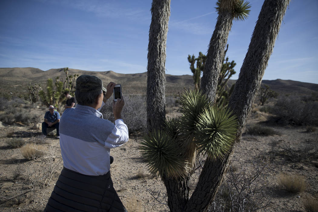 A person photographs a Joshua tree during the First Day Hike at Spring Mountain Ranch State Park in Las Vegas, Monday, Jan. 1, 2018. Erik Verduzco Las Vegas Review-Journal @Erik_Verduzco
