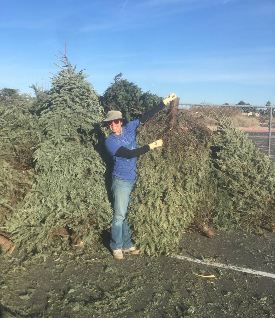 Rachel Lewison, Southern Nevada recycling coordinator at the Nevada Division of Environmental Protection, also serves as a co-chair of the Southern Nevada Christmas Tree Recycling Committee, a coa ...
