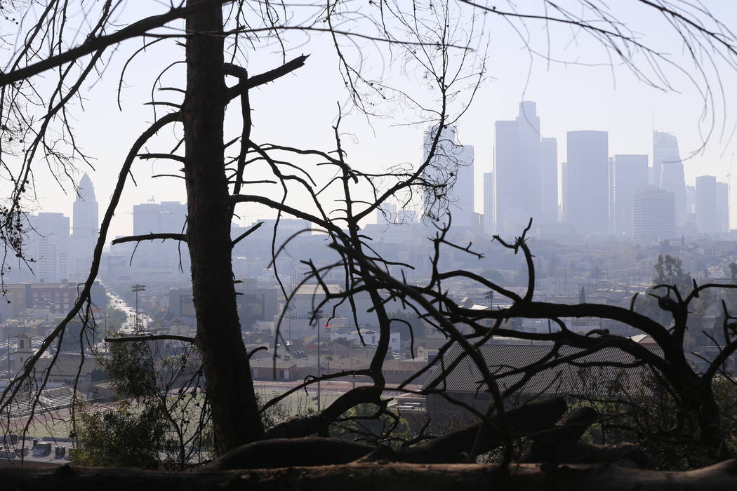 Los Angeles skyline is seen through burned trees on Dec. 14, 2017, after a brush fire erupted in the hills in Elysian Park in Los Angeles. California's water managers are saying it's too early yet ...