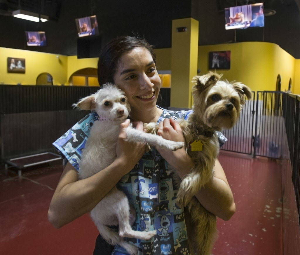 Kennel attendant Idaly Perez holds Lamb Chop, left, and Allie at Las Vegas Pet Resort on Tuesday, January 9, 2018, in Las Vegas. Benjamin Hager Las Vegas Review-Journal @benjaminhphoto