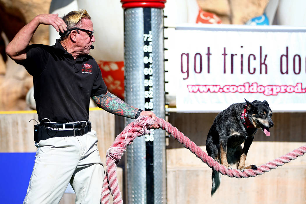 "Lou ""Mack"" McCammon, founder of CoolDog Productions, performs with his dog, Chuey, during Jump! The Ultimate Dog Show at the Springs Preserve in Las Vegas, Jan. 13, 2018. The Las ..."