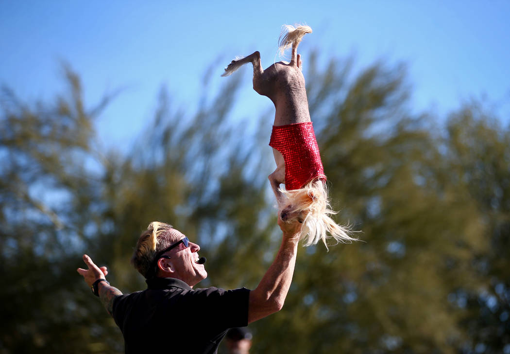 "Lou ""Mack"" McCammon, founder of CoolDog Productions, performs with his dog during Jump! The Ultimate Dog Show at the Springs Preserve in Las Vegas, Jan. 13, 2018. The Las Vegas-b ..."