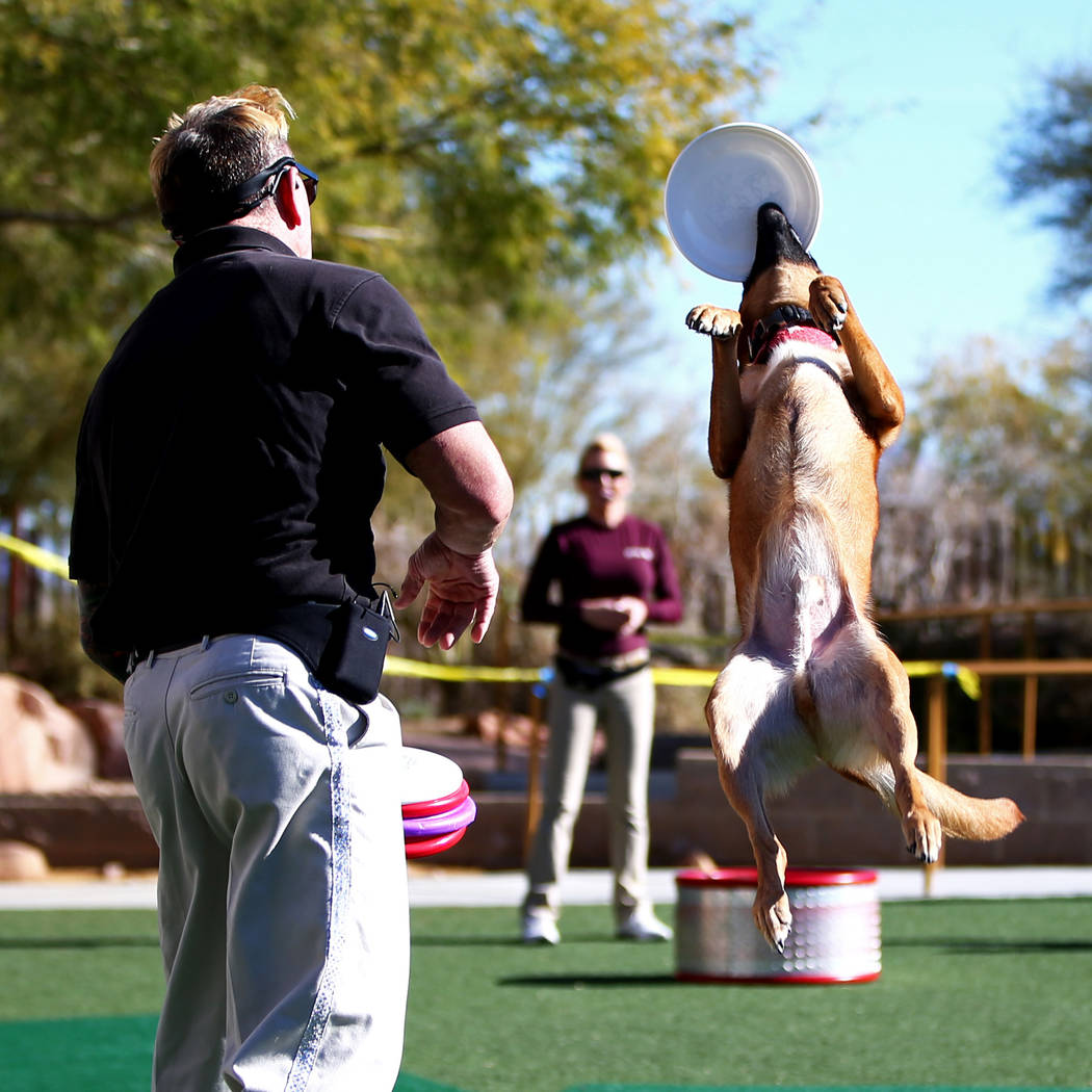 "Lou 'Mack"" McCammon, founder of CoolDog Productions, performs with his dog during Jump! The Ultimate Dog Show at the Springs Preserve in Las Vegas, Jan. 13, 2018. The Las Vegas-based comp ..."