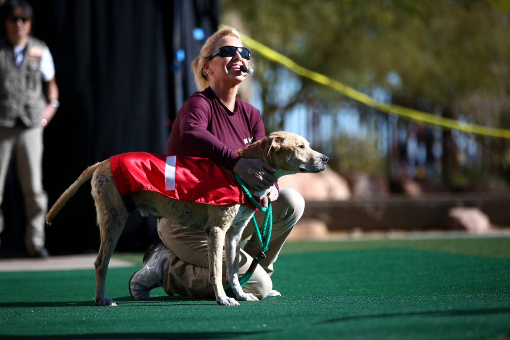 Mindy Lindsey brings out her three-legged dog for a performance during Jump! The Ultimate Dog Show at the Springs Preserve in Las Vegas, Jan. 13, 2018. The Las Vegas-based company produces action- ...
