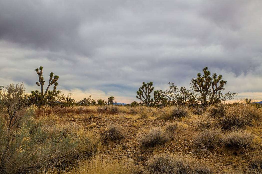 Nipton sits at the eastern entrance to The Mojave National Preserve. (Tonya Harvey Real Estate Millions)