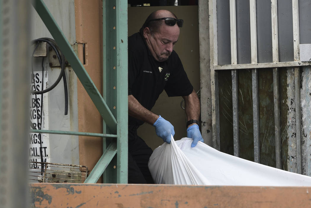 A forensic worker lifts a  a body at a crime scene, in San Juan, Puerto Rico, Thursday, Jan. 11, 2018 . As the island struggles to recover from Hurricane Maria, it is facing one of the biggest spi ...