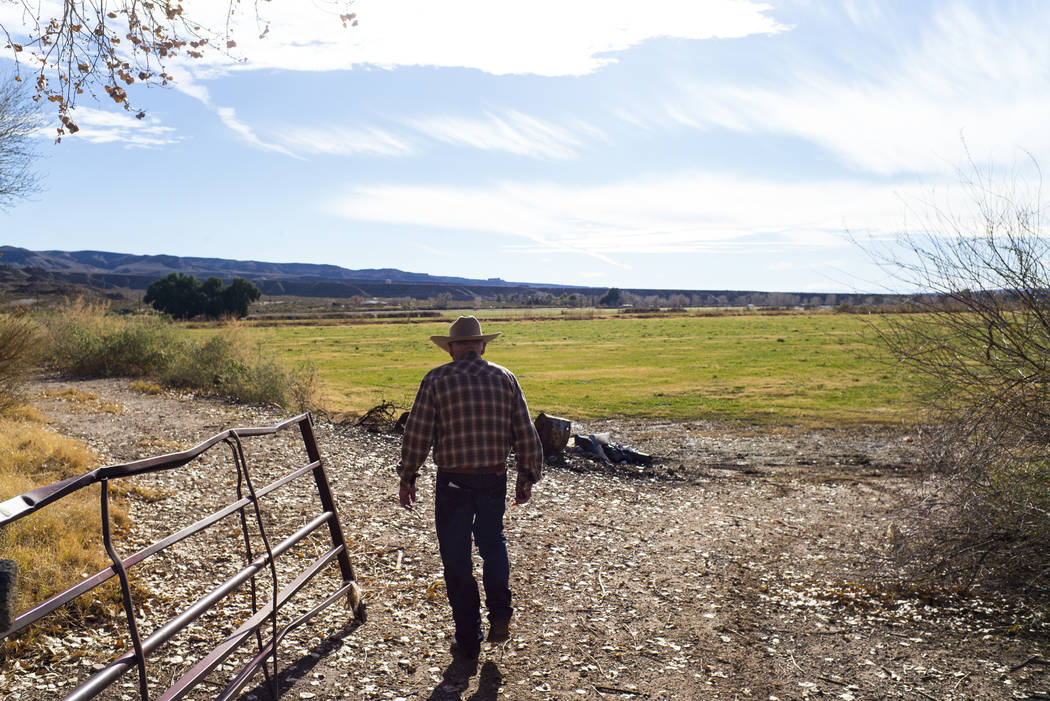 Cliven Bundy checks on fields of alfalfa and ryegrass at Bundy Ranch in Bunkerville on Thursday, Jan. 11, 2018. Bundy was released from federal custody after charges against him were dismissed in  ...