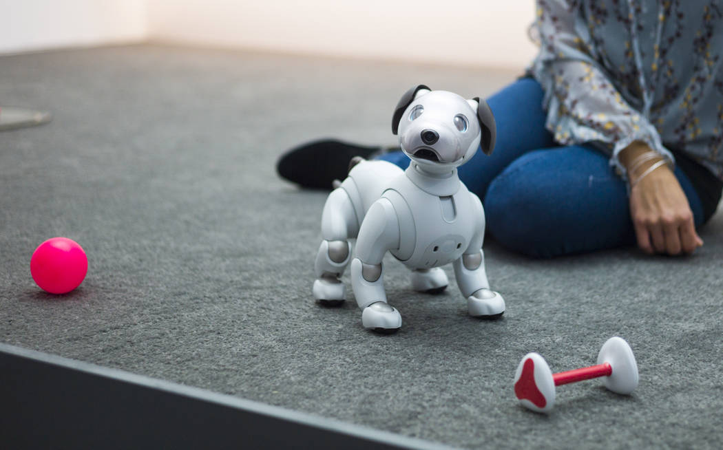 Aibo, a robot dog, at the Sony booth during CES at the Las Vegas Convention Center in Las Vegas on Friday, Jan. 12, 2018. Chase Stevens Las Vegas Review-Journal @csstevensphoto