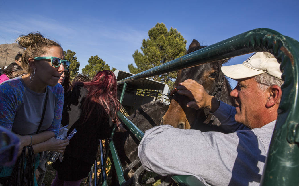 Brian Smith, owner of Funny Farm Mustangs, shows off one of his American Mustangs during a Law Enforcement Appreciation Day event at Police Memorial Park on Saturday, Jan. 13, 2018. Smith has help ...
