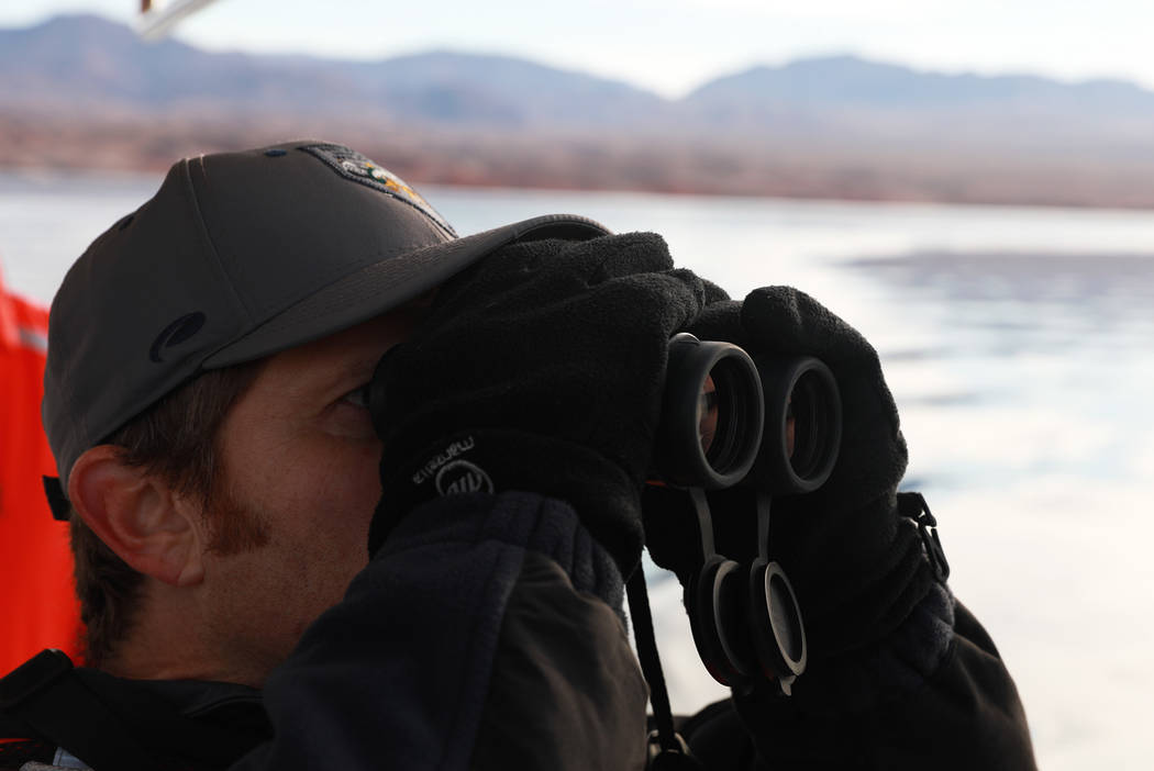Southern Region Supervising Biologist Joe Barnes, 39, scans the sky for bald eagles at Lake Mead National Recreation Area, Wednesday, Jan. 17, 2018. Survey teams set out at dawn to survey the loca ...