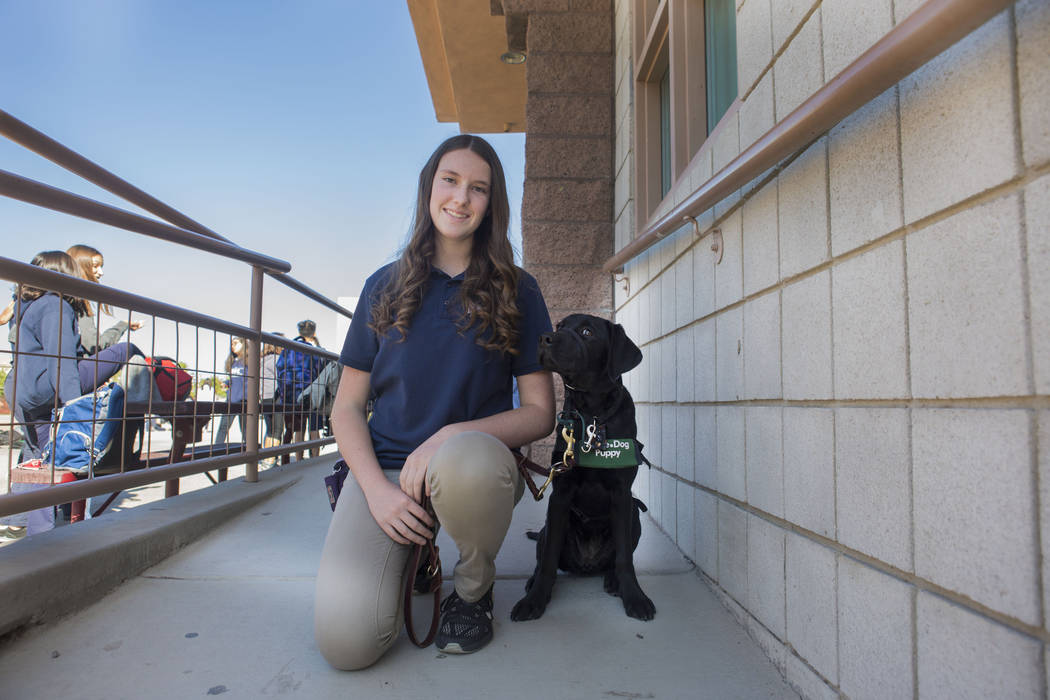High school Girl Scout Claire Binfield poses with Octave, a guide-dog puppy she is training at Coral Academy of Science Las Vegas Sandy Ridge Campus in Henderson. Elizabeth Page Brumley/Las Vegas  ...