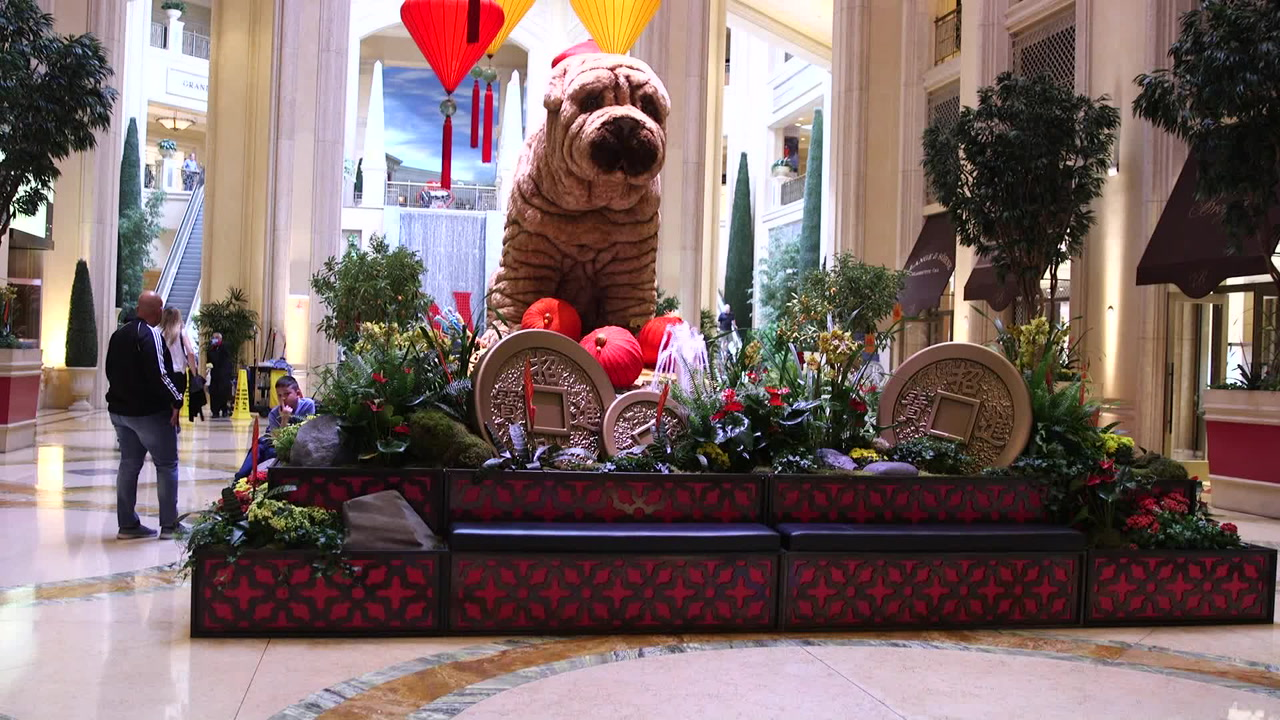 Venetian Palazzo Showcase Chinese Year Of The Dog