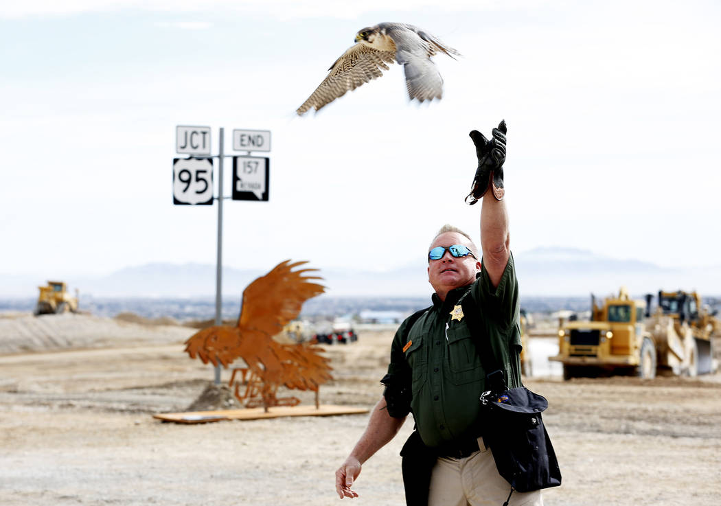 Master Falconer Dave Kanellis, 51, does a demonstration with a hawk during the Nevada Department of Transportation's presser, which discussed the $65 million project aimed at improving a six mile  ...