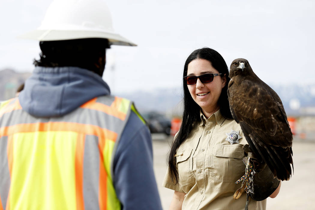 Master Falconer Civon Kanellis, 34, talks to the public about her red-tailed hawk before the Nevada Department of Transportation's presser, which discussed the $65 million project aimed at improvi ...