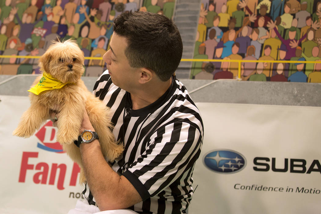 Puppy Bowl referee Dan Schachner calls a play during Puppy Bowl XIII.(Animal Planet)