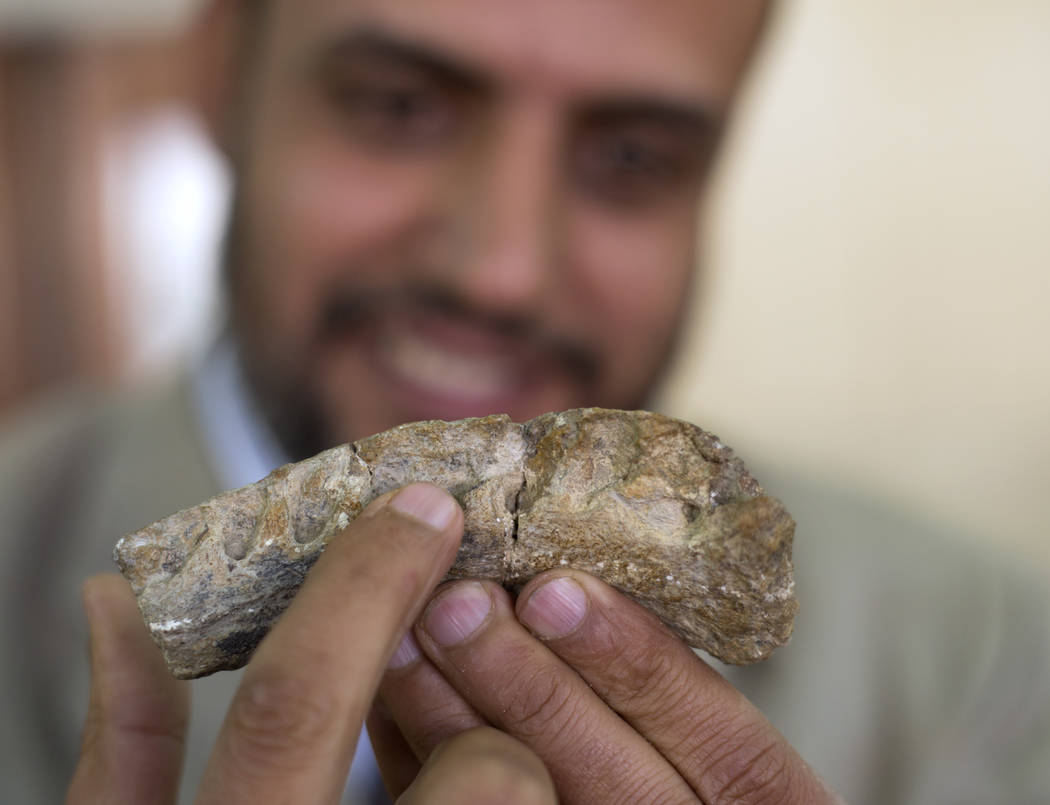 In this Saturday, Feb. 3, 2018 photo, Hesham Sallam, head of Mansoura university's Center for Vertebrate Paleontology, displays a left dentary, which holds the teeth, of a Cretaceous period dinosa ...